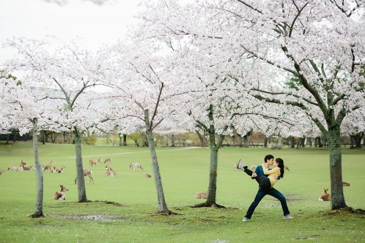 cherry blossom sakura kyoto japan pre wedding photography_6906